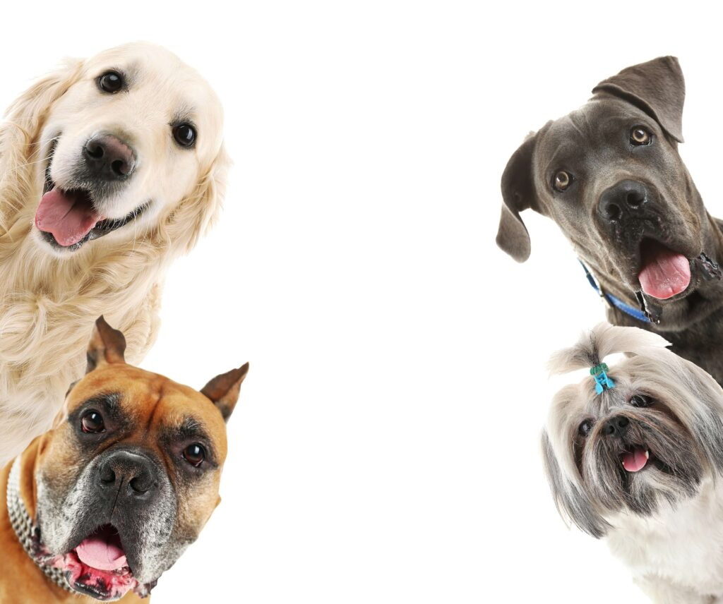 Meloxidyl For Dogs What It The Benefits And Which Alternatives Are Available Today